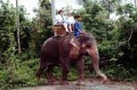 Book your Half Day Safari in Phuket