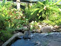The garden is a peaceful shady placy with a stream cascading through