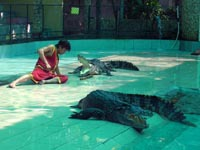 Crocodile show at Phuket Zoo